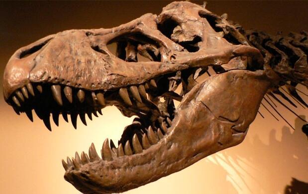 Entradas para la exposición Dinopétrea