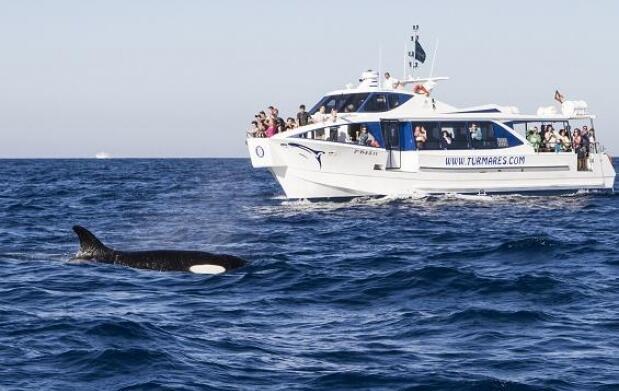 Avistamiento de cetáceos para dos