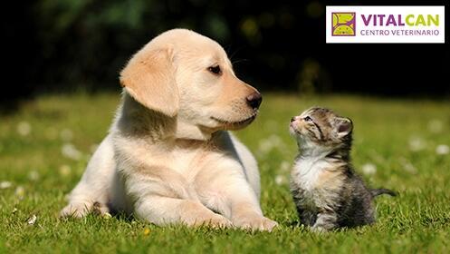 Peluquería para perros o gatos + consulta
