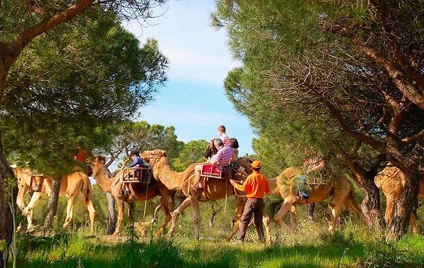 En dromedario por el entorno de Doñana