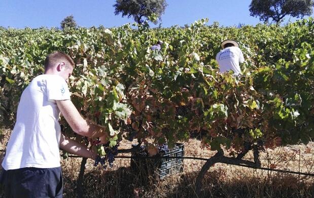 Visita a bodega con cata de 6 vinos