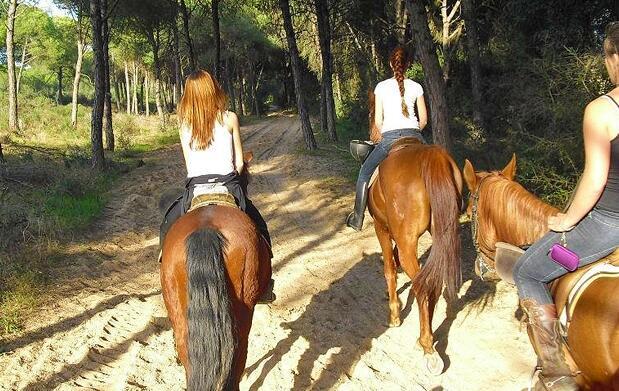 Descubre el mundo del caballo