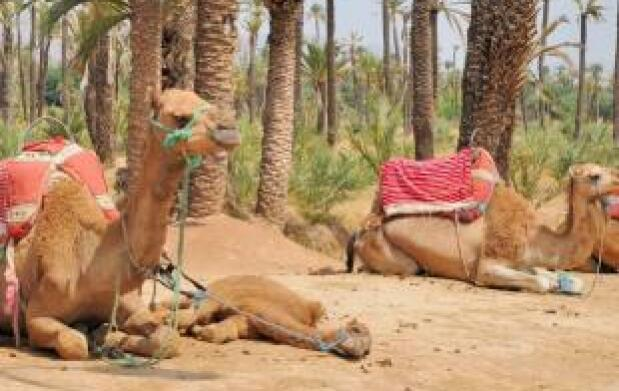 Marrakech - 3 Noches en Hotel Riad 4* + Tour