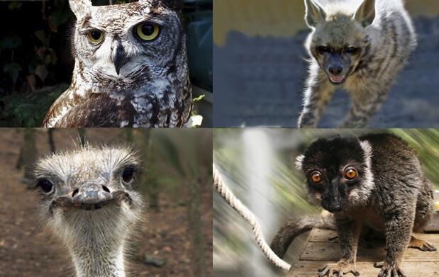 ¡Visita Mundo Park Zoo en familia!