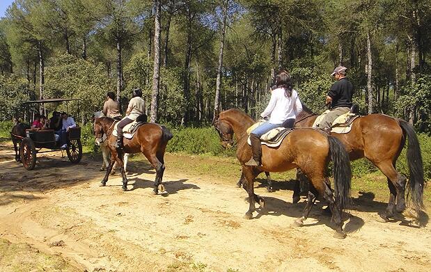 Paseo a caballo por pinares de Aznalcázar