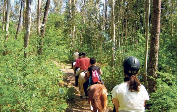 Descubre la Sierra de Huelva a caballo