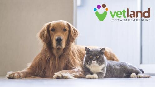 Revisión completa de perro o gato + vacuna de rabia