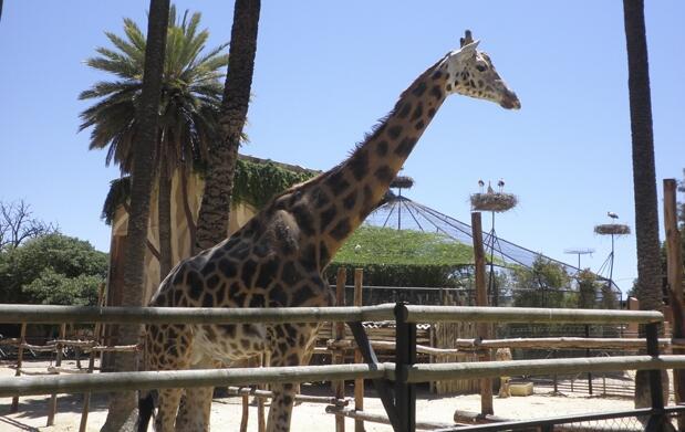 Visita en familia el Zoobotánico de Jerez